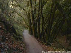 Rancho San Antonio - Wildcat loop trail