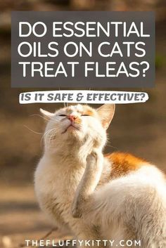 Are essential oils for fleas on cats safe and effective? Click here to find out! #catcare #cathealth #fleas #cats #catblog #essentialoils Fleas On Kittens, Cat Has Fleas, Flea Prevention For Cats, Essential Oils For Fleas, First Time Cat Owner, Cat Nutrition, Kitten Care, Cat Health, Pet Care