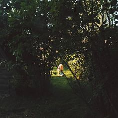 Secret garden behind the window🌿Таинственный сад за моим окном. . #vscocam #vsco  #forest #wood #summer #August  #landscape #fairytale #liveadventure #liveautentic #livefolk #folk #adventure #livethelittlethings #livegreen #nature #garden