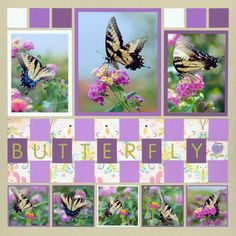 Lots of great border ideas - post shows how to weave this butterfly title/border.