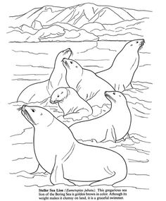 Arctic And Antarctic Life Coloring Book Dover Publications