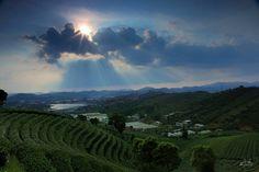 Pu'er City southern Yunnan province