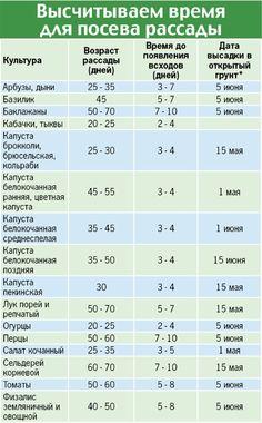 *Для средней полосы России.