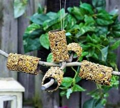 You will love these Toilet Roll Bird Feeder Crafts and so will your feathered friends. Watch the video tutorial and see just how easy this diy is.