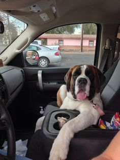 This is the only way my saint bernard loves to ride