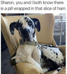 Funny humor, funny animal memes, funny dogs, cute funny animals, funny do. Funny Dog Memes, Funny Animal Memes, Cute Funny Animals, Funny Animal Pictures, Funny Cute, Funny Dogs, Cute Dogs, Great Dane Funny, Cat Memes