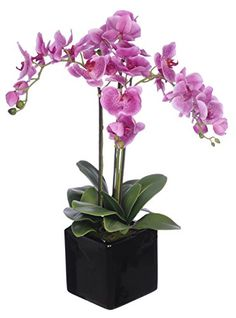 House of silk flowers artificial dark purple triple stem house of silk flowers artificial dark purple triple stem phalaenopsis orchid arrangement to view further visit now this is an amazon affiliate mightylinksfo