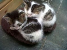 two cute kittens sleeping on slippers