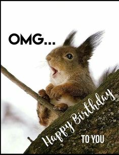 OMG Happy birthday Funny Squirrel - Happy Birthday Funny - Funny Birthday meme - - OMG Happy birthday Funny Squirrel The post OMG Happy birthday Funny Squirrel appeared first on Gag Dad. Cute Birthday Wishes, Funny Happy Birthday Meme, Happy Birthday Messages, Birthday Quotes For Him, Happy Birthday Images, Happy Birthday Greetings, Happy Birthday Squirrel, Animal Birthday, Funny Squirrel