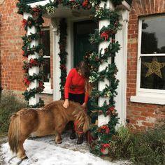 Christmas Photos, Christmas Tree, Wonderful Time, Photo Shoot, Holiday Decor, Xmas Pics, Teal Christmas Tree, Photoshoot, Christmas Pics