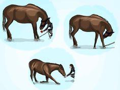 How to Teach a Horse to Bow -- via wikiHow.com
