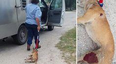 Doveva prendersi cura del cane, lo trascina gravamente ferito! FOTO CHOC – Ecco cosa è accaduto dopo - http://www.sostenitori.info/doveva-prendersi-cura-del-cane-lo-trascina-gravamente-ferito-foto-choc-cosa-accaduto/231954