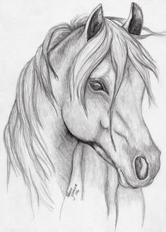Realistic Animal Drawings, Pencil Drawings Of Animals, Horse Drawings, Sketches Of Horses, Easy Horse Drawing, Horse Pencil Drawing, Abstract Pencil Drawings, Draw Animals, Animal Sketches