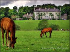 County Kilkenny, Ireland