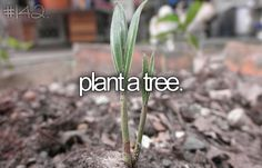 Plant a Tree - Bucket List #142 #bucketlist