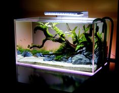 55 Wondrous Aquarium Design Ideas for Your Extraordinary Home Decoration