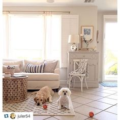 Its important to take everything into context when designing a space. A beautifully designed home even keeps in mind the wants and needs of your pets. Design A Space, House Design, Very Pretty Girl, Animal Pictures, Your Pet, Pets, Instagram Posts, Inspiration, Home