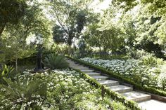 The estate gardens have been beautifully designed by award winning horticulturist Keith Kirsten to bloom 356 days a year African Lily, Spa Reception, Agapanthus, Garden Inspiration, Garden Ideas, Amazing Gardens, Botanical Gardens, South Africa, Photo Galleries