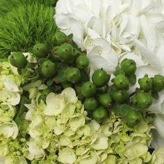 Bring the outdoors in with the touch of fresh blooms for your special day! Simple Garden Fresh Pack features classic white and green hydrangeas, hypericum berries, and green dianthus for a textured floral look! Arrange alone for a classic look using tri-tiered cylinder vases or add in other FiftyFlowers stems like White Ecuadorian Roses for extra volume for gorgeous table arrangements.