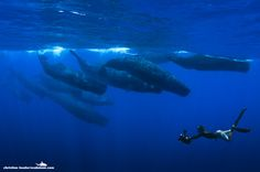 Swimming With Giants by Christian Loader on 500px