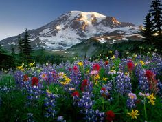 paisajes con flores - Cerca con Google