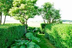 Landhave med 'rum' skabt af hække og buske. Her rabarberhave *  Rhubarb garden.
