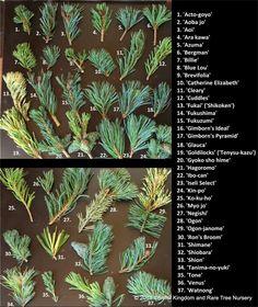 Dwarf Conifers - http://www.coniferkingdom.com