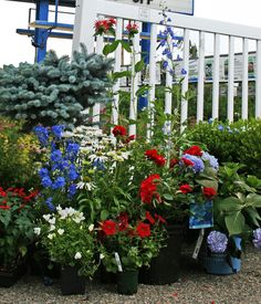Get patriotic in your landscaping by adding pops of red, white, and blue!
