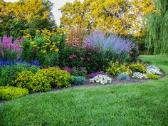 Mid summer – Lythrum, yarrow, Ruby Star coneflower, and Russian sage.  These are tall, hardy perennials which make a beautiful back border.  They will bloom all summer if deadheaded regularly.  Also shown are blue salvia and melanpodium.