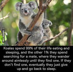 Basically Im just a koala. - Koala Funny - Basically Im just a koala. Koala Funny Basically Im just a koala. The post Basically Im just a koala. appeared first on Gag Dad. The post Basically Im just a koala. appeared first on Gag Dad. Koala Meme, Funny Koala, Funny Animals, Cute Animals, Wild Animals, Baby Animals, Fun Facts About Koalas, Wtf Fun Facts, Strange Facts