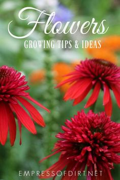 Tips for growing a garden full of flowers from a happy flower fanatic. #flowergardening #growingtips #empressofdirt