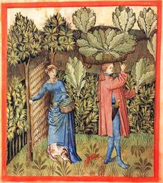 A woven wattle gate keeps animals out of the 15th century cabbage patch (Tacuinum Sanitatis, Rouen)