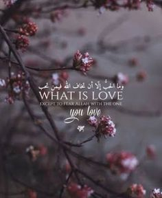MaD_❤_designer👑 MoHaDeSeWhat is love except to fear Allah with the one you love 💕 What is love except to fear Allah with the one you love 💕 What is love except to fear Allah with the one you love 💕 Hadith Quotes, Allah Quotes, Muslim Quotes, Religious Quotes, Urdu Quotes, Iqbal Quotes, Quotations, Hijab Quotes, Life Quotes