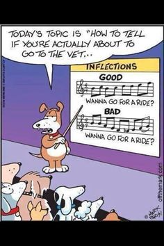 For dogs, music is everything.