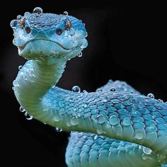 Photo by The viper. Photo by The viper. Photo by The viper. Pretty Snakes, Beautiful Snakes, Cute Reptiles, Reptiles And Amphibians, Beaux Serpents, Beautiful Creatures, Animals Beautiful, Serpent Animal, Animals And Pets