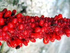Weird plant fruit - stage 4 of 4 by Happy Sleepy, via Flickr