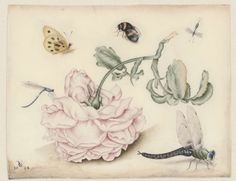 anoniem | A Rose and Five Insects, attributed to Christoffel van den Berghe, 1618 |