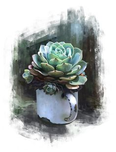 Cactus Drawing, Cactus Painting, Plant Drawing, Cactus Art, Art Watercolor, Watercolor Plants, Plant Illustration, Watercolor Illustration, Plant Art