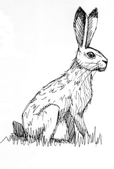 hare illustration
