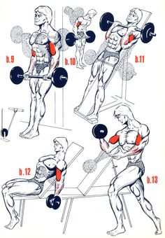 Exercices Biceps - Musculation - FORUM Forme & Sport abdos homme: