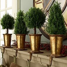 Gold and Evergreen topiaires