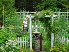 LOVE this blog!! 'Gardeningbren in Nova Scotia: Peas Between the Goal Posts'