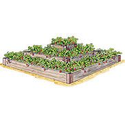 3 tier Strawberry Bed from gardeners.com/raised-beds