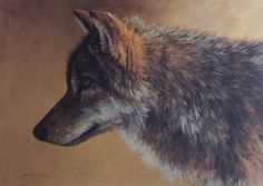 Morton Solberg Timber Wolf