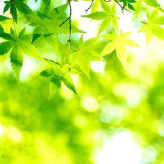 Fresh Green.