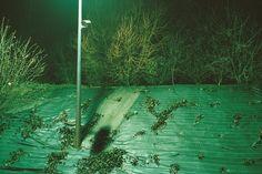 Julien Magre - On the Road, Dream Narrative | LensCulture