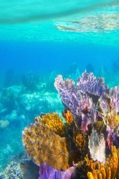 This Coral Reef Is About to Become the First in the World With Its Own Insurance Policy Beneath The Sea, Under The Sea, Arte Coral, Best Places To Vacation, Underwater World, Ocean Life, Beach Photography, Beach Pictures, Sea Creatures
