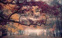 壁紙をダウンロードする 池, 秋公園, ベンチ