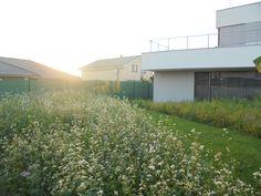 """V druhej časti záhrady sme zasiali """"inú"""" kvitnúcu lúku z Rožnovahttp://www.roznovska-travni.cz/cz/m/kvetouci-louka-z-roznova/aj s odporúčanou zmesou divokých kvetovhttps://www.samenhaus.de/greenfield-renatura-wildblumen/a-528723/"""