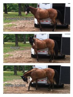 Exactly!!! Horses do amazing things when they think no one is looking